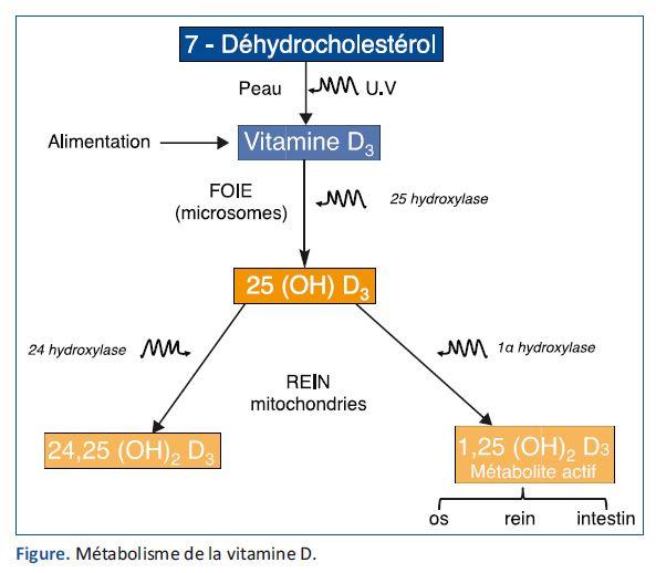 sources vitamine d
